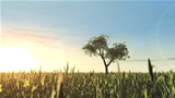 Tree_in_Field